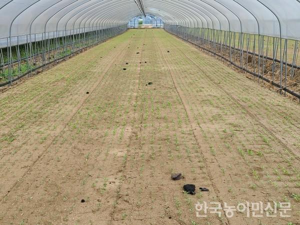 이천 쿠팡 물류센터 화재 여파로 주변 농지가 잿덩이로 피해를 봤다.