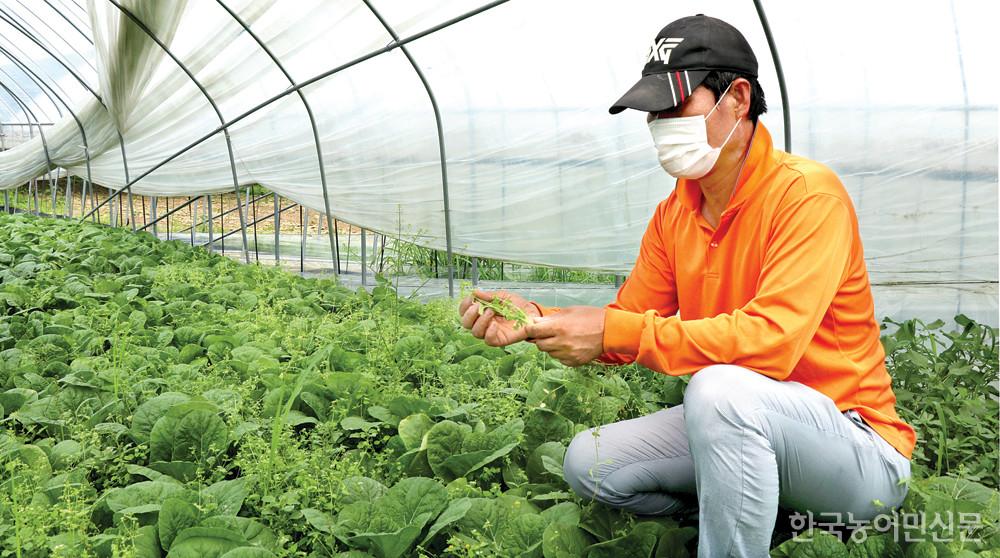 고진택 한농연 안성시연합회장이 수확을 못해 풀과 얼갈이가 뒤섞인 하우스 밭을 무심히 바라보고 있다.